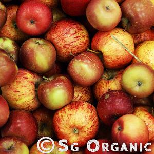juicy organic fuji apple