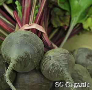 super food organic beetroot