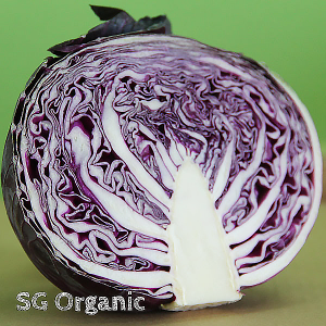 Bright organic red cabbage