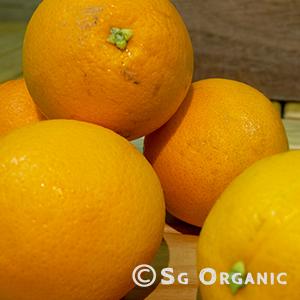 Juicing_oranges_sgo
