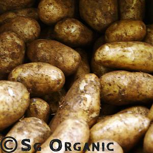 floury dutch cream potatoes