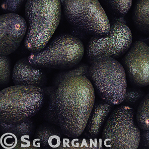 healthy organic avocado