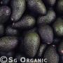 healthy organic avocado