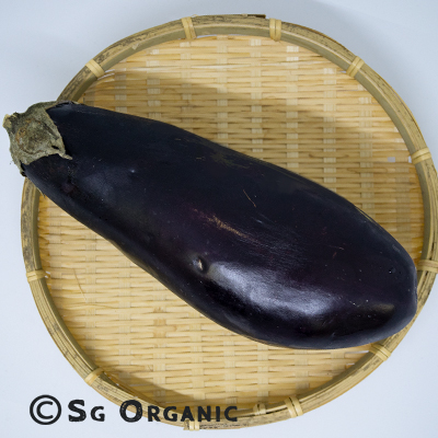 eggplant_sgo