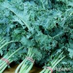 nutritious organic scottish green kale,healthy organic rainbow kale, red kale,green kale,black kale,lacinato kale,Cavolo Nero,black Tuscan Kale,Russian red kale