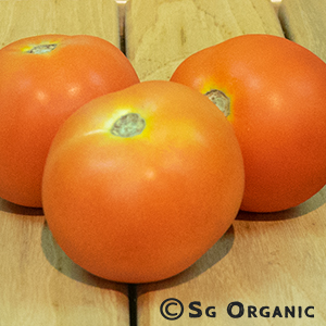 tomato_sgo