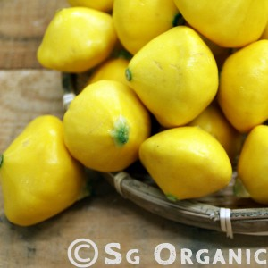 Sg Organic Summer Squash Yellow