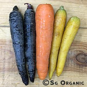 carrots_rainbow