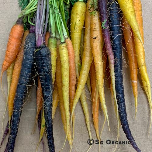 rainbow-carrot