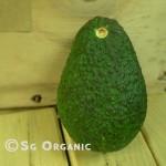Hass_avocado_ea_sgo