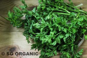 fragrant organic parsley flat