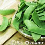 nutritious organic snow peas