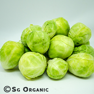brussel sprout_sgo