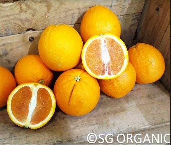 Orange - Cara Cara